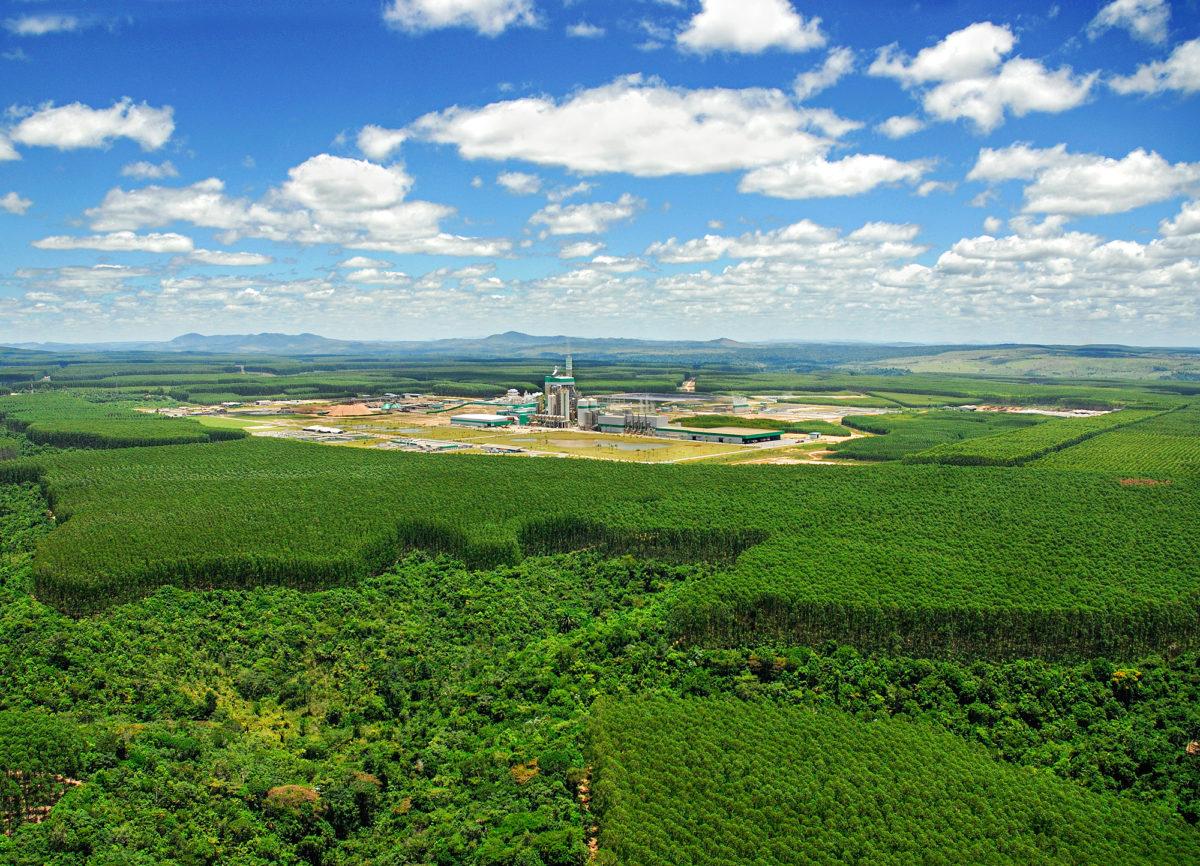 Stora Enson sellutehdas tuottaa biomateriaaleja eukalyptusviljelmien keskellä Brasiliassa.